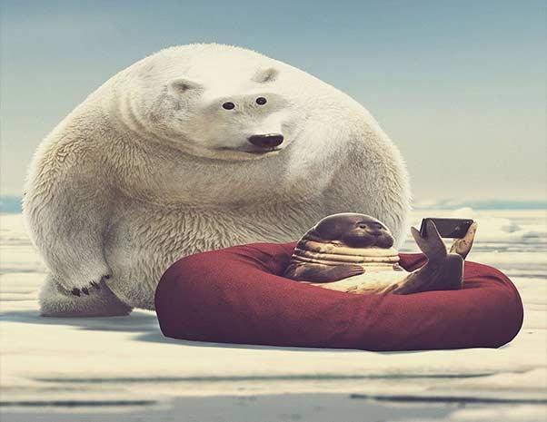 Интернет в Арктике
